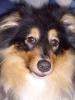 Gesundheitsurlaub mit Hund - letzter Beitrag von Flinxzy