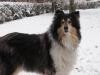 Obedience - Verein oder doch erst Hundeschule? - letzter Beitrag von Piflo
