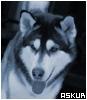 Amerikanische Wolfshunde - letzter Beitrag von Cyrreana