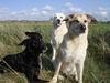 Ersthund gesucht, Raum nördliches Schleswig-Holstein - letzter Beitrag von Biby