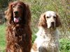 Was macht ein Terrier im Harz? - letzter Beitrag von SetterJungs