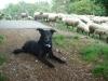 Grundrgegeln der Hundeerziehung - letzter Beitrag von Shaping-Dog