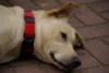 Hund nehmen? Brauche dringend Entscheidungshilfe - letzter Beitrag von Schwarzertee