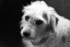 Urlaub mit 4 oder mehr Hunden - letzter Beitrag von Beulchen