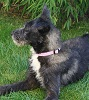 Scottish Deerhound Mischling? - letzter Beitrag von Fritte