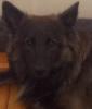 Wolfsmaedchen