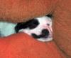 Hotelurlaub mit Hund - letzter Beitrag von Kromi