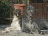 Epilepsie beim Hund - wie weit ist sie verbreitet? - letzter Beitrag von mühlau