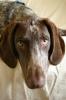 Wie alt kann ein Vorstehhund werden? - letzter Beitrag von LaBandida