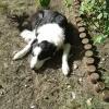 Hund in Konstanz/Wollmating... - letzter Beitrag von Lotte1973
