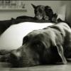 Wie reagieren, wenn der eigene Hund von anderem fixiert wird? - letzter Beitrag von Neroxy