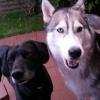Hilfe mein Hund ist seit ein paar Monaten aggressiv! - letzter Beitrag von Sommerregen135