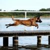 Hund ignoriert Befehle! - letzter Beitrag von herzblatt