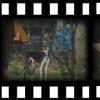 Kleiner Spontanurlaub mit Hund - letzter Beitrag von joeys