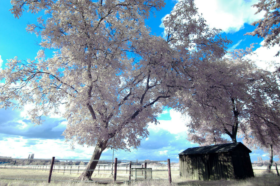 infrared_landscapes_1_by_two_lane_blacktop-d3ym56k.jpg