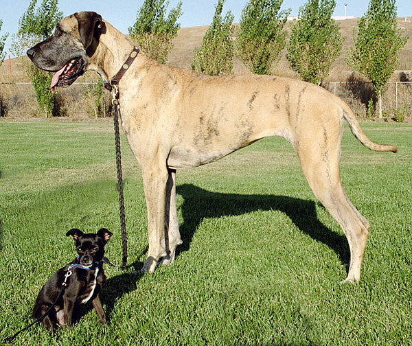 Big_and_little_dog_1.jpg