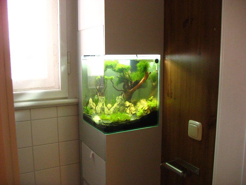 Unser neues Badezimmer mit Garnelen-Aquarium - Der Hund