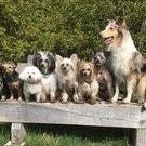 Klein- und Kleinsthunde