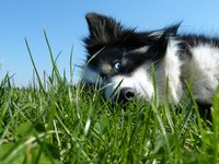 Hunde aus dem Ausland