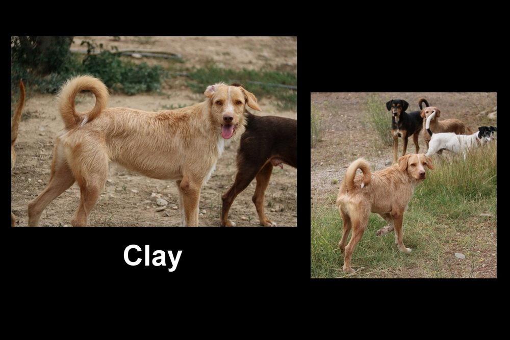 59e4bcdacb762_Clay_Bildgrendern.jpg.3ee7f666818f51178d5829cad457a3e9.jpg