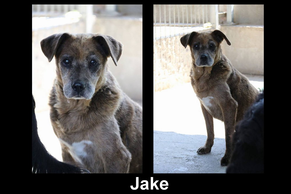 Jake.jpg.f68e657ece76a284f083e74a52ef2e4b.jpg