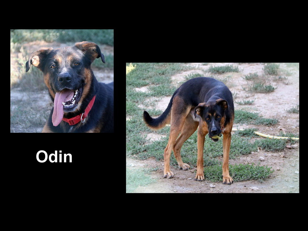 Odin.jpg.f918b4c16a9b2a969af729e38d30ad29.jpg
