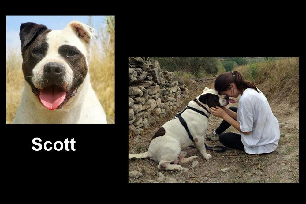Scott.jpg.5798a72fa09c66781460590dadc586df.jpg