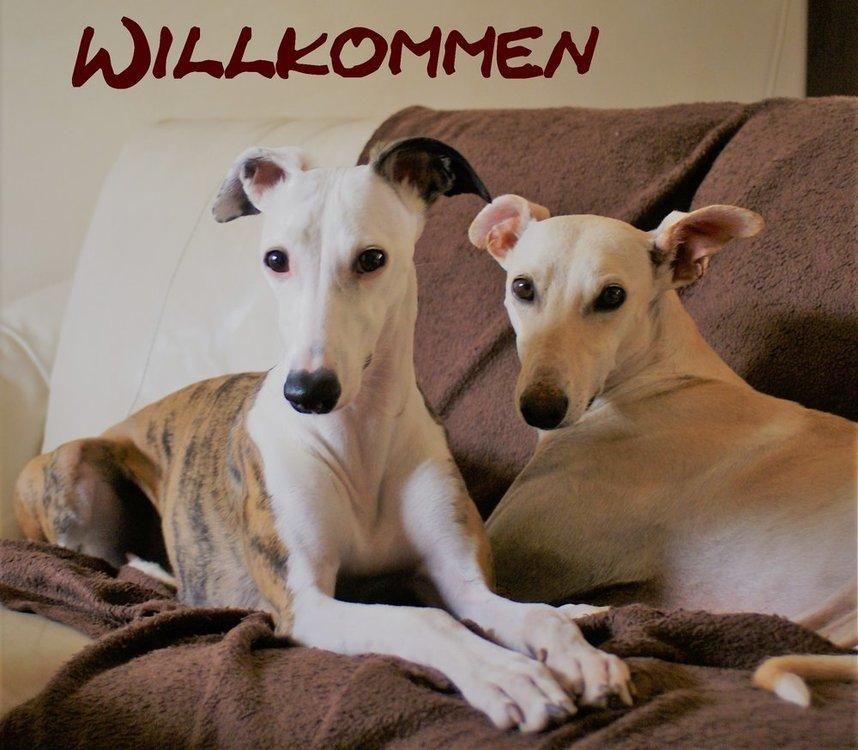 5a214f7958d6f_Willkommengemeinsam.thumb.jpg.82e4c854164084b308e2f7a7d0f0203b.jpg