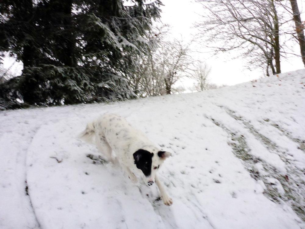 _Schnee 077.jpg