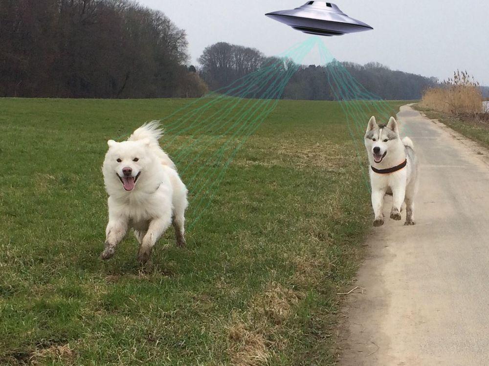 aliens.jpg.c9f63c46e41ab439e997301d5b4a4bee.jpg