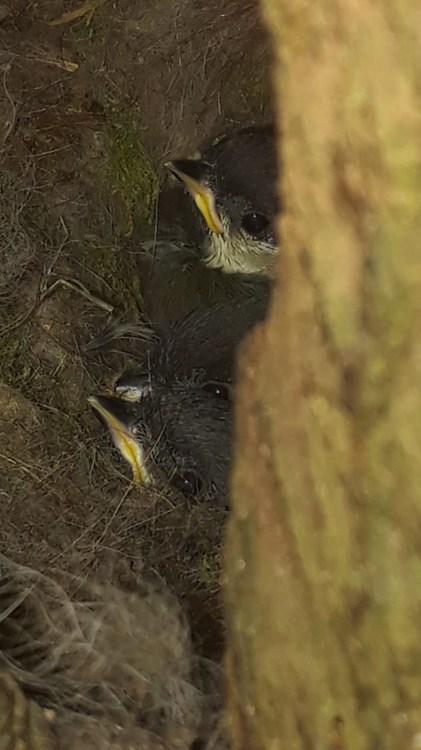 nest.jpg.faf54ba5d3cf45dfb0793086e1c0191f.jpg