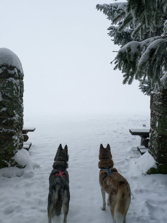 snowi.JPG.d53598ae873ee270a003a3a508f980fe.JPG
