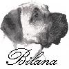 Bilana
