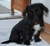 Maja_Terrier