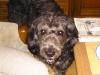 i_love_my_dog