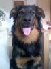 Rudi 2008