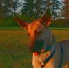 Cindy-Dog