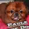 PauleTheDog
