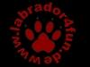 black-labrador