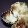 Mut_zum_Hund